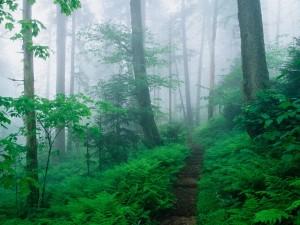 Bosque verde con niebla
