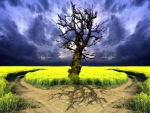 Postal: Árbol sin hojas entre dos caminos
