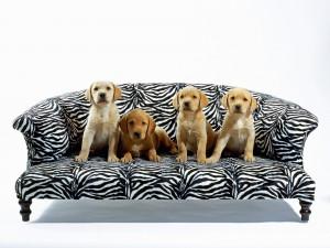Postal: Perros en el sillón