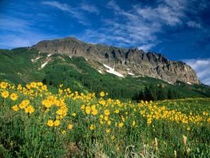 Flores amarillas bajo la montaña