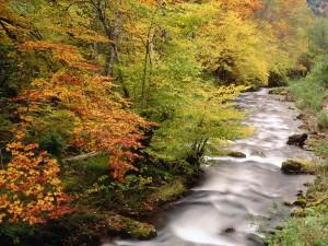 Orilla del río con los colores del otoño