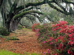 Postal: Árboles con grandes ramas