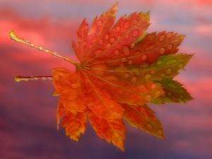 Hoja de otoño con gotas de agua