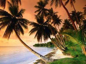 Postal: Blue Lagoon Resort Beach, Micronesia