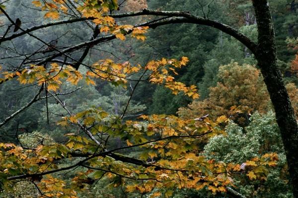 Árboles en otoño mojados por la lluvia