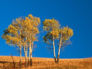 Árboles en otoño bajo un cielo azul