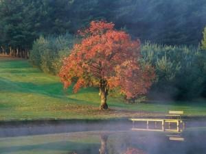 La calma de una mañana de otoño