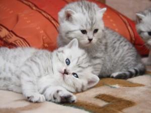 Gatitos encima de la cama
