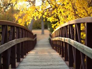 Postal: Puente de madera