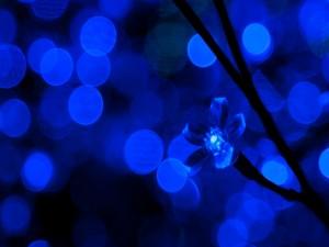 Luz azul con forma de flor