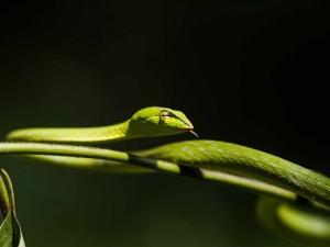 Serpiente verde en una rama