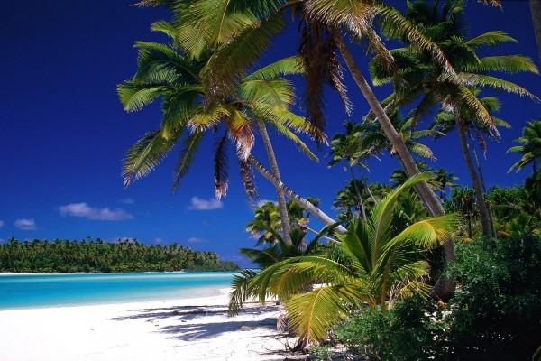 Bonita playa con muchas palmeras