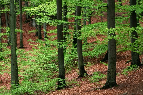 Árboles verdes en el bosque