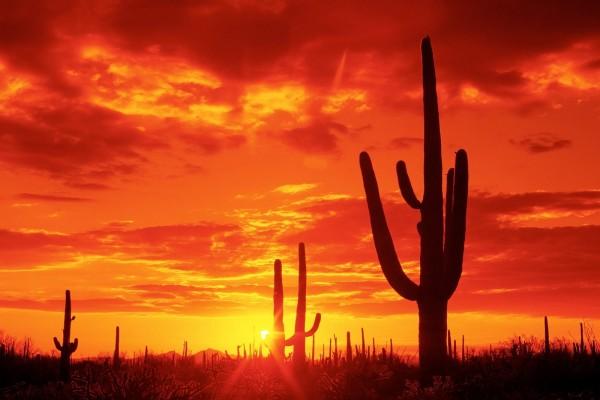 Puesta de sol en el Parque Nacional Saguaro, Arizona