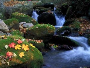 Hojas otoñales sobre las piedras del río