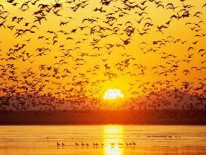 Aves sobre el lago al atardecer