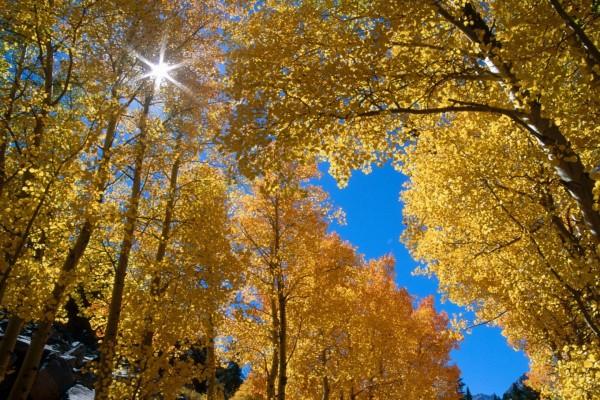 El brillo del sol entre las hojas de los árboles