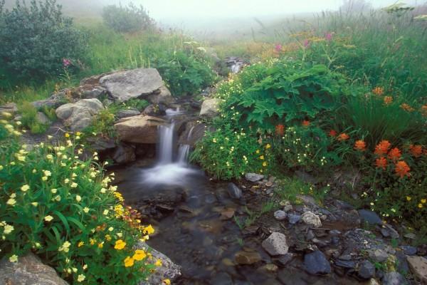 Plantas y flores en la pequeña cascada