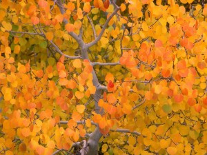 Postal: Árbol con bonitas hojas otoñales