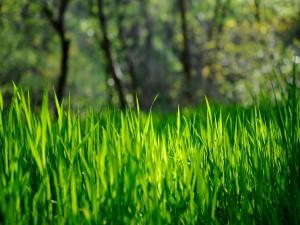 Hierba verde iluminada por el sol