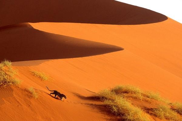 Leopardo en el Parque nacional de Namib-Naukluft, Namibia