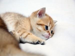 Gatito cansado