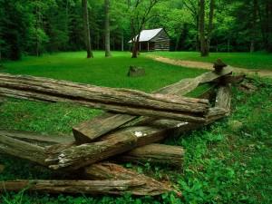 Troncos y cabaña de madera en el bosque