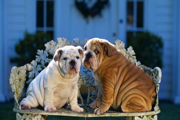 Dos perros en un banco