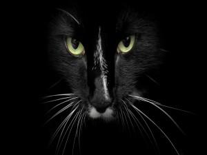 Un gato negro en la oscuridad