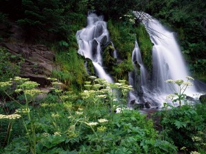 Postal: Cascadas en el Bosque Nacional Umpqua, Oregón