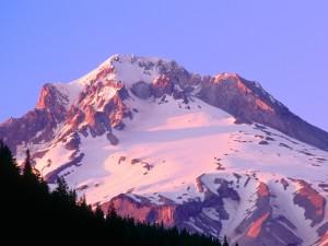 Postal: Brillo alpino en las laderas del Monte Hood, Oregón