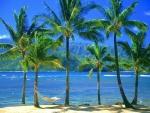 Una hamaca vacía en Kauai, Hawaii