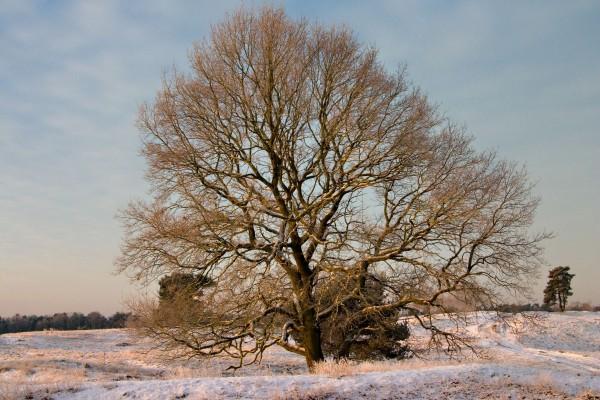Árbol sobre un suelo nevado