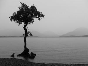 Postal: Árbol en la orilla