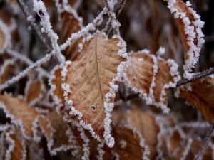 Postal: Hojas en invierno