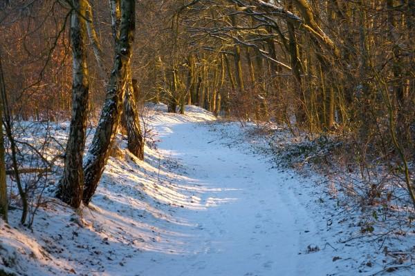 Camino con nieve