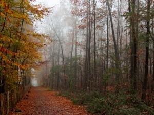 Postal: Camino con hojas otoñales