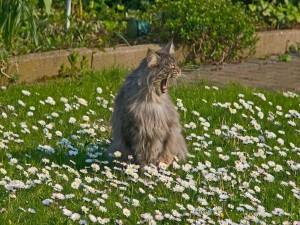 Postal: Un gato bostezando en el jardín