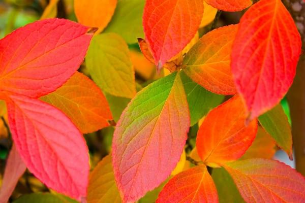 Hojas cambiando de color