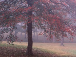 Niebla en la árboleda