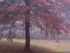 Postal: Niebla en la árboleda