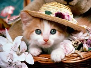 Postal: Gatita con sombrero