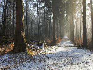 Camino entre árboles y con nieve