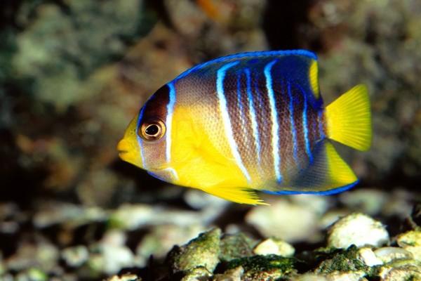 Un pequeño pez tropical