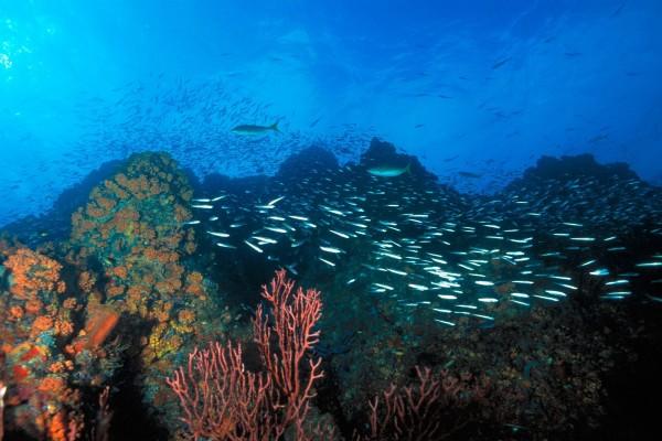 Peces nadando entre el coral