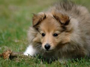 Postal: Un perro jugando en la hierba