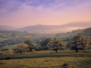 Campo con árboles al amanecer