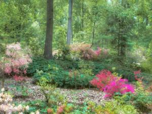 Postal: Plantas con flores