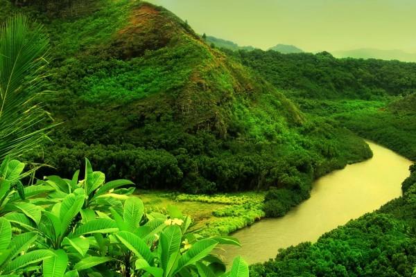 Vista de un río en una zona verde
