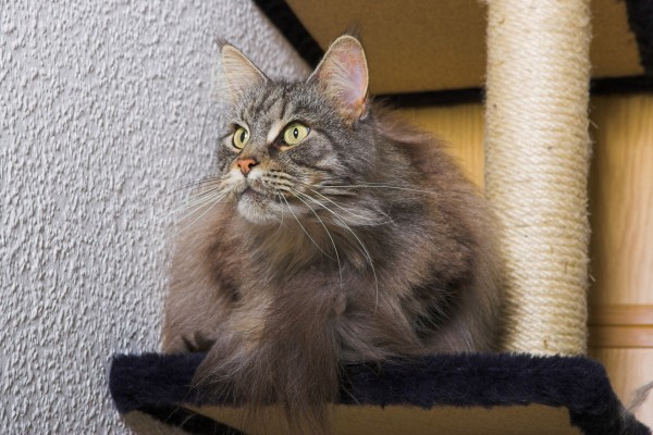 Un precioso gato con largos bigotes